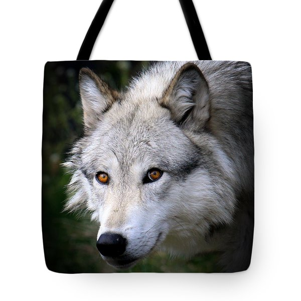 Wolf Stare Tote Bag by Steve McKinzie