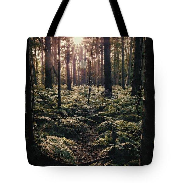 Woodland Trees Tote Bag by Amanda Elwell