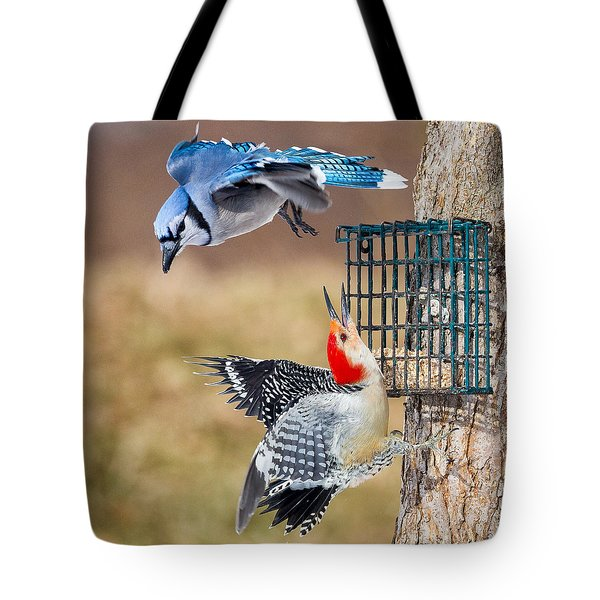 Woodpeckers And Blue Jays Square Tote Bag by Bill Wakeley