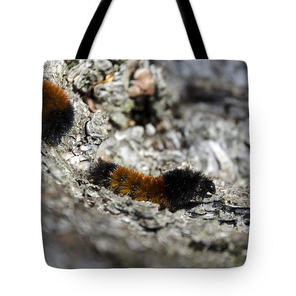 Woolly Bear Caterpillar Tote Bag by Christina Rollo