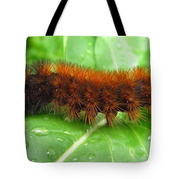 Wooly Bear  Tote Bag