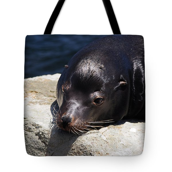 Wounded Sea Lion Resting Tote Bag