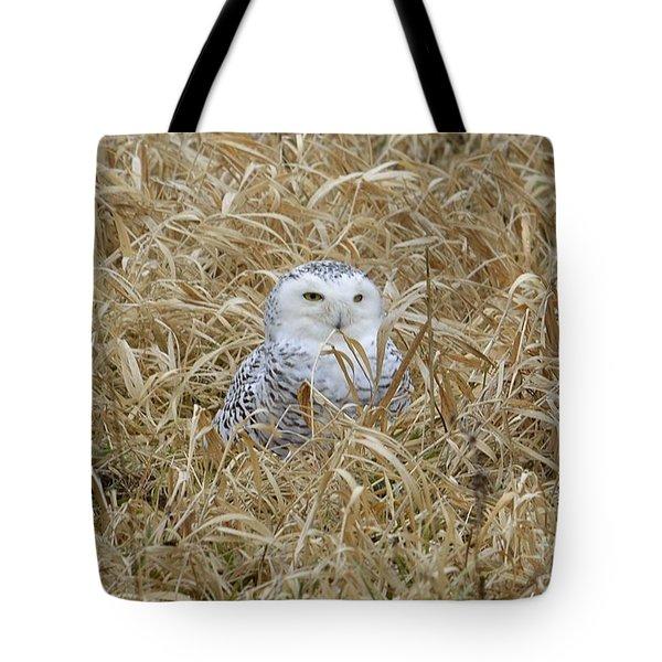 Wv Snowy Tote Bag by Randy Bodkins