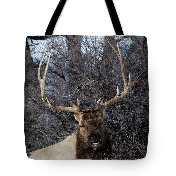 Wyoming Elk Tote Bag
