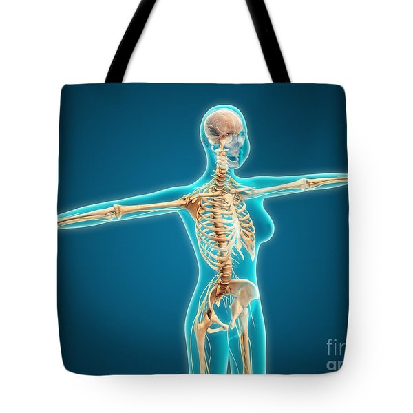 X-ray View Of Female Body Showing Tote Bag by Stocktrek Images