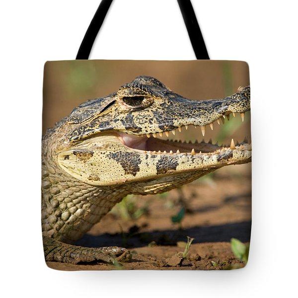 Yacare Caiman Caiman Crocodilus Yacare Tote Bag
