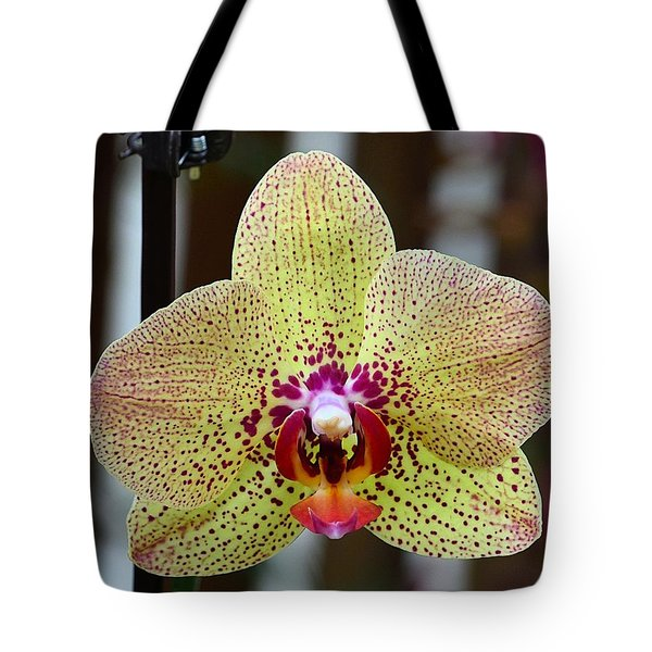 Yellow And Maroon Orchid Tote Bag