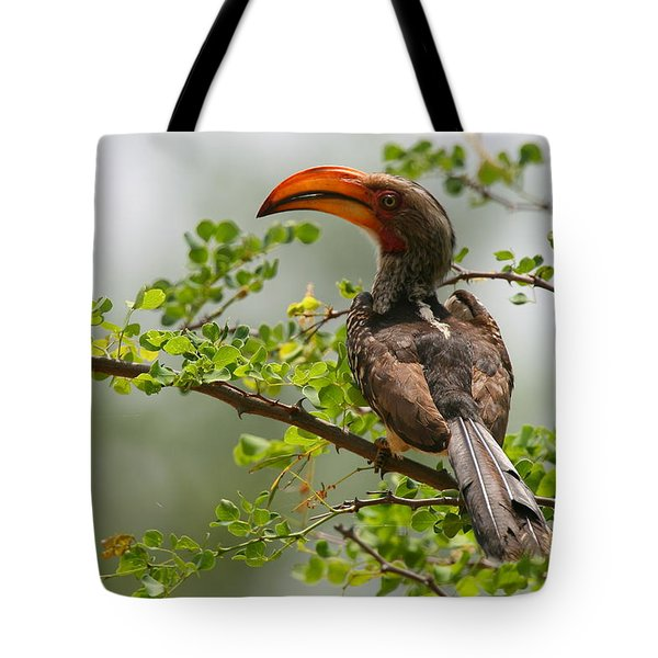 Yellow-billed Hornbill Tote Bag by Bruce J Robinson