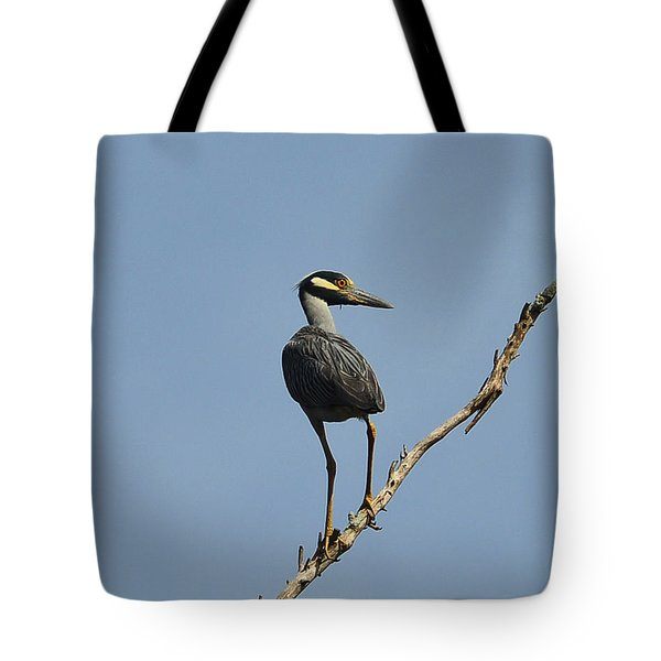 Tote Bag featuring the photograph Yellow-crowned Night Heron by Dana Sohr