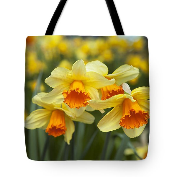 Yellow Daffodils Tote Bag by Peter French