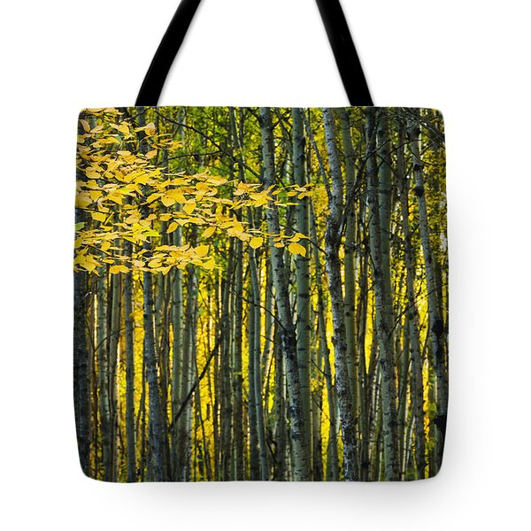Yellow Fall Birch Leaves Against An Tote Bag by Joel Koop
