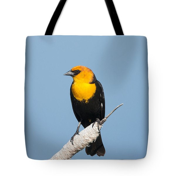 Tote Bag featuring the photograph Yellow Headed Blackbird by Jack Bell