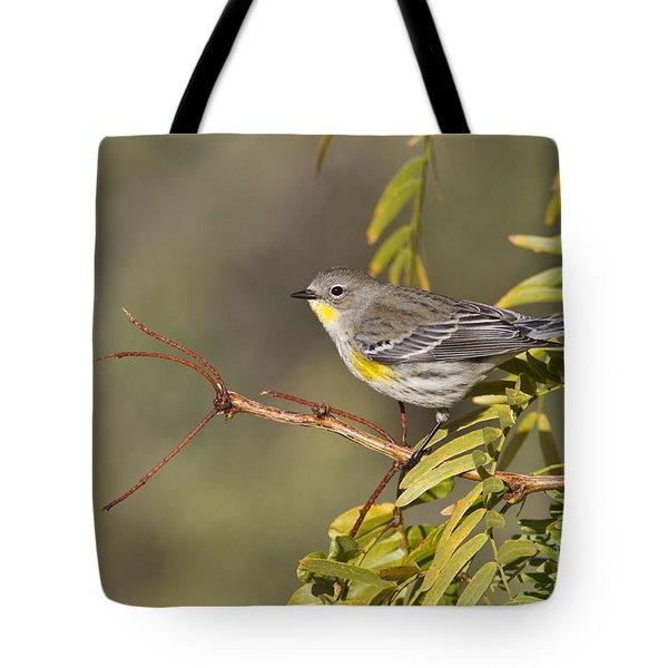 Yellow Rumped Warbler Tote Bag by Bryan Keil
