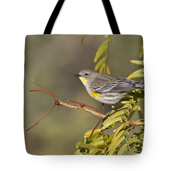 Yellow Rumped Warbler Tote Bag