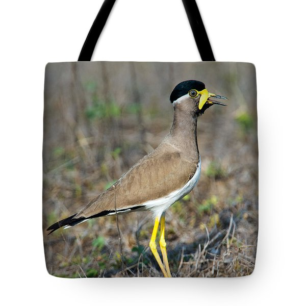 Yellow-wattled Lapwing Vanellus Tote Bag by Panoramic Images