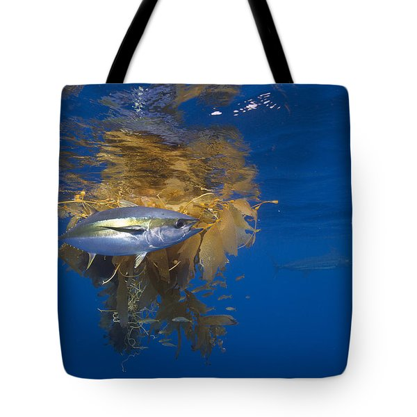 Tote Bag featuring the photograph Yellowfin Tuna And Kelp Nine-mile Bank by Richard Herrmann