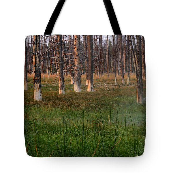 Yellowstone Mysterious Morning Tote Bag by Teresa Zieba