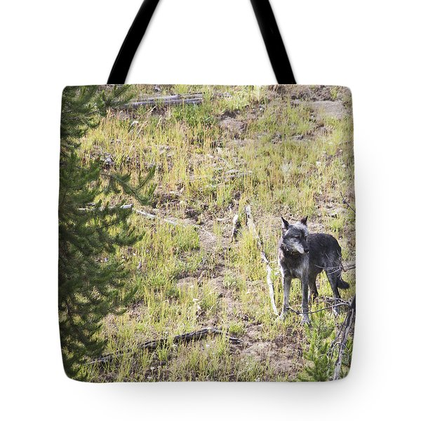 Tote Bag featuring the photograph Yellowstone Wolf by Belinda Greb
