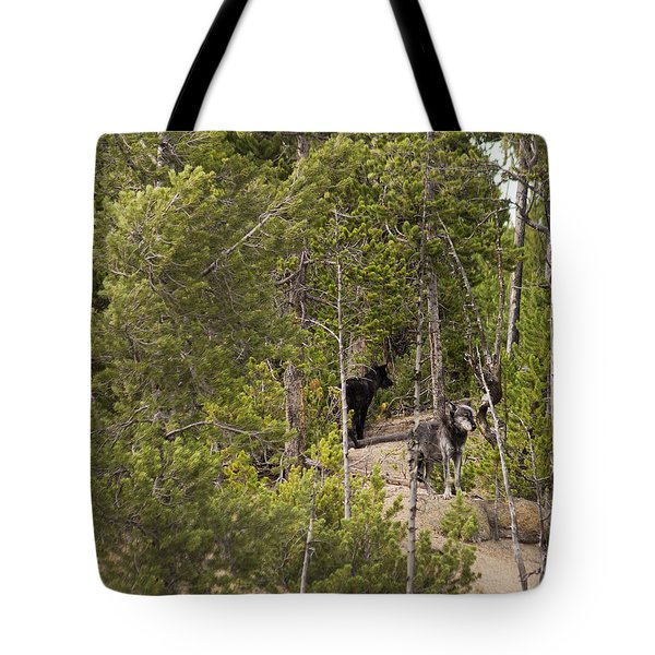 Tote Bag featuring the photograph Yellowstone Wolves by Belinda Greb