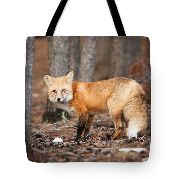 You Caught Me Tote Bag