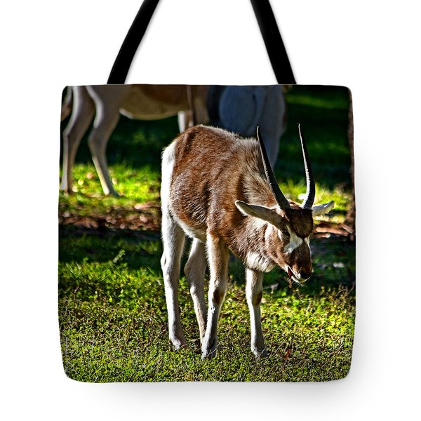 Youngster Addax Tote Bag by Miroslava Jurcik