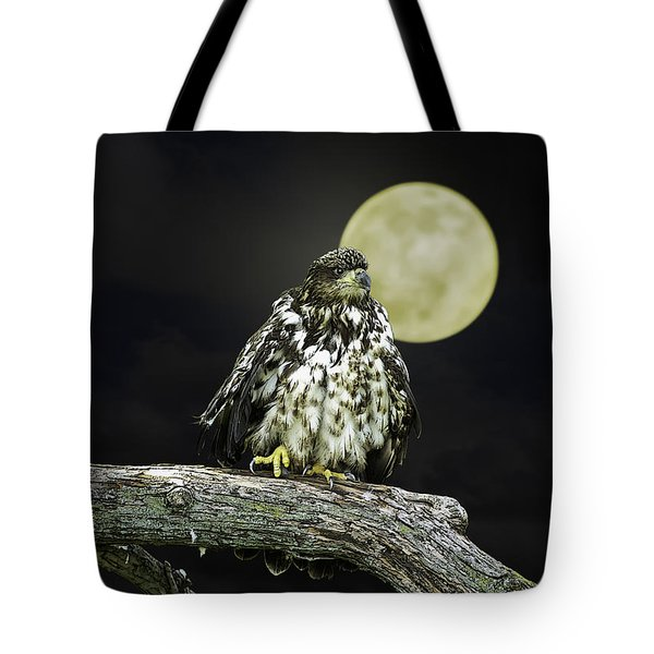 Tote Bag featuring the photograph Young Bald Eagle By Moon Light by John Haldane