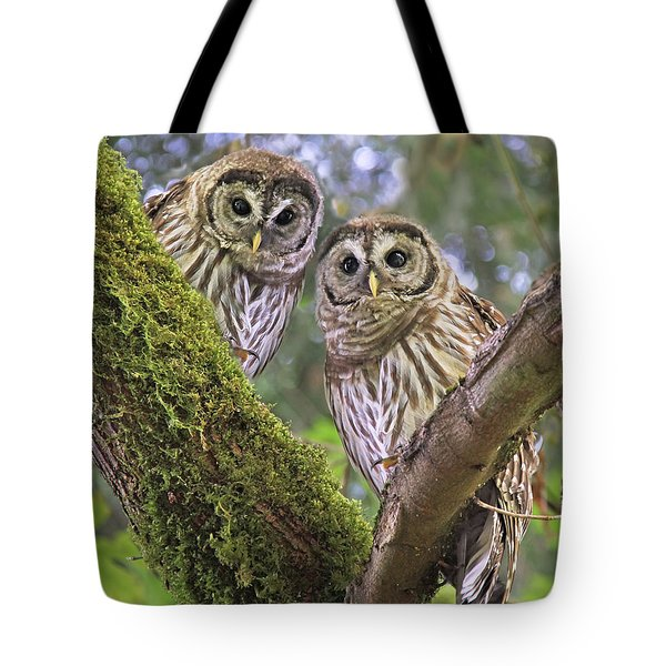 Young Barred Owlets  Tote Bag