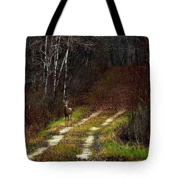 Young Buck And Autumn Tote Bag