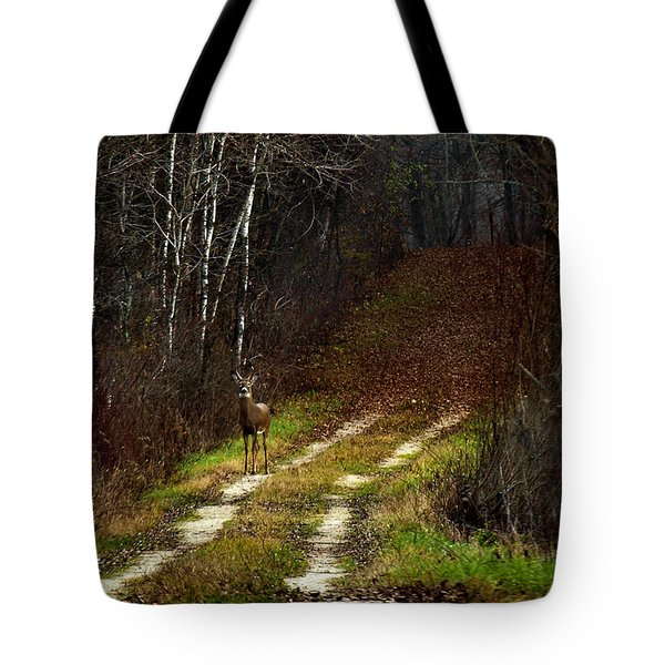 Young Buck And Autumn Tote Bag by Thomas Young