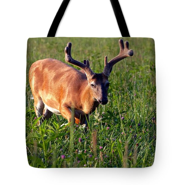 Young Buck Tote Bag by Eleanor Abramson