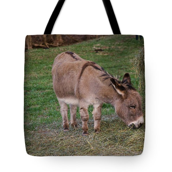 Young Donkey Eating Tote Bag
