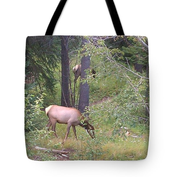 Tote Bag featuring the photograph Young Elk Grazing by Fortunate Findings Shirley Dickerson