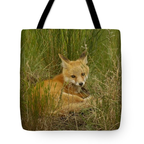 Young Fox Under The Fence Tote Bag