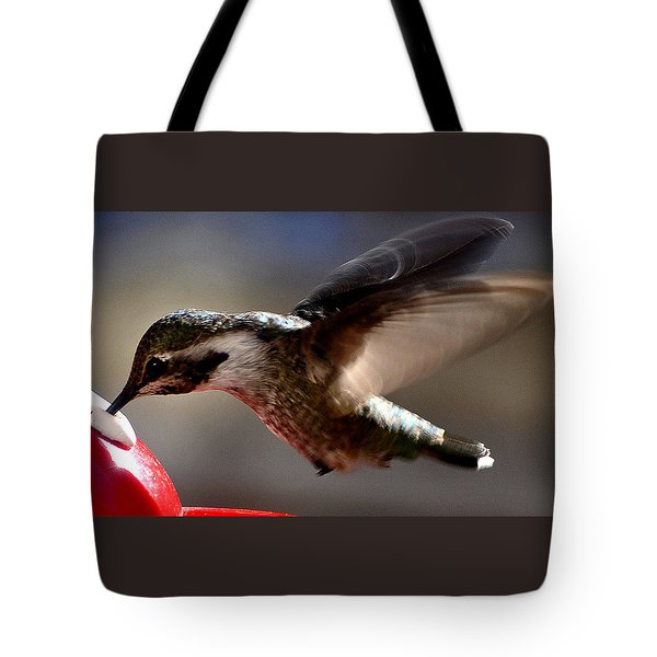 Tote Bag featuring the photograph Young Hummingbird Male Anna by Jay Milo