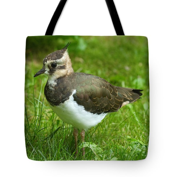 Young Lapwing Tote Bag