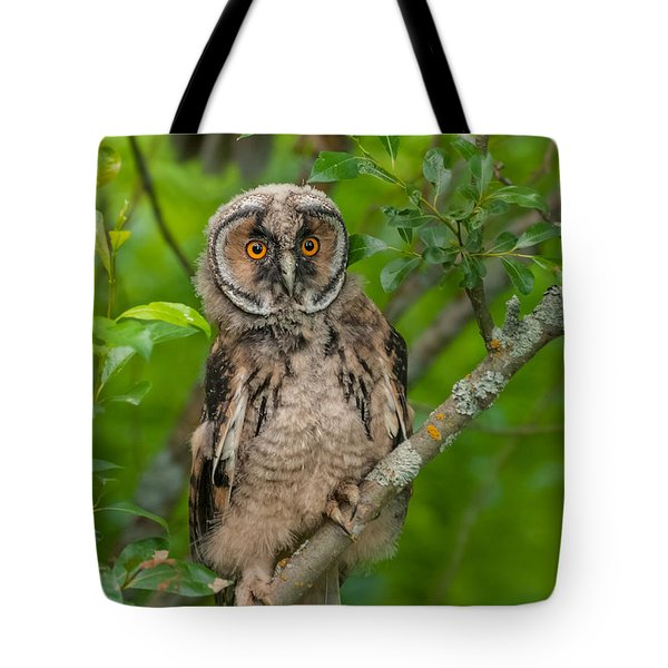 Young Long-eared Owl Tote Bag by Janne Mankinen