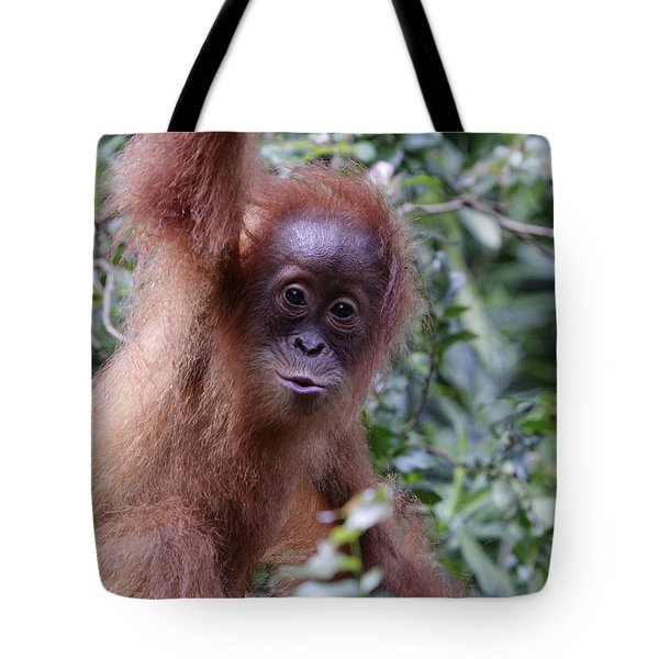 Tote Bag featuring the pyrography Young Orangutan Kiss by Shoal Hollingsworth