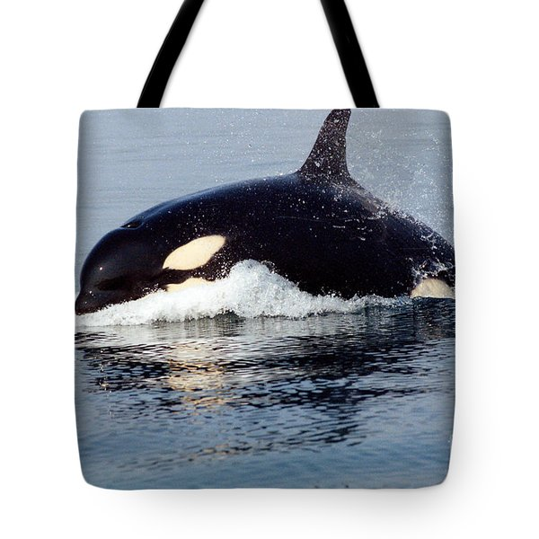 Tote Bag featuring the photograph Young Orca Off The San Juan Islands Washington 1986 by California Views Mr Pat Hathaway Archives