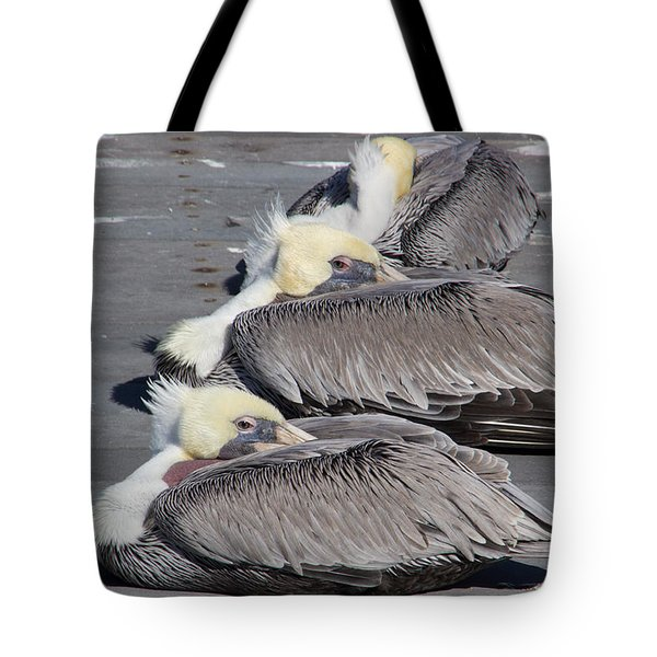 Young Pelicans Tote Bag by Heidi Smith