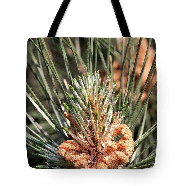 Young Pine Cone  Tote Bag by Ramabhadran Thirupattur
