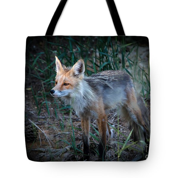 Young Red Fox Tote Bag by Robert Bales