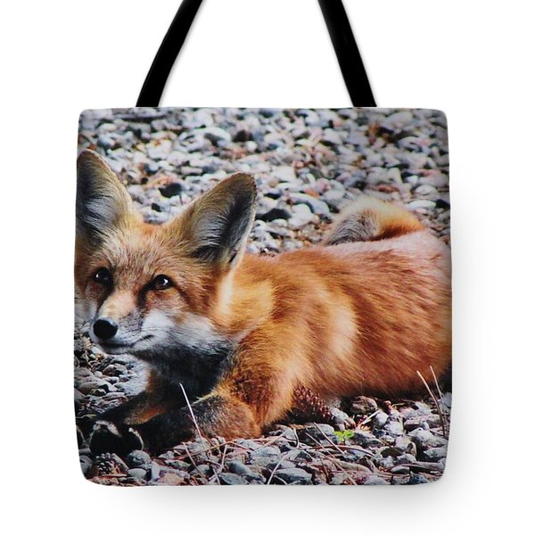 Young Red Fox Watches Squirrel Tote Bag by Diane Alexander