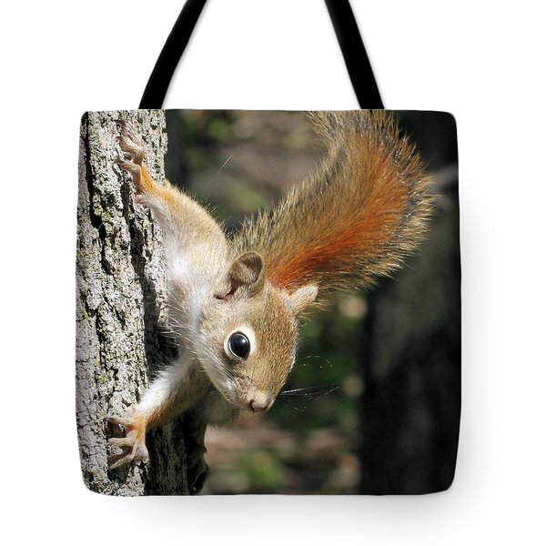 Young Red Squirrel Tote Bag