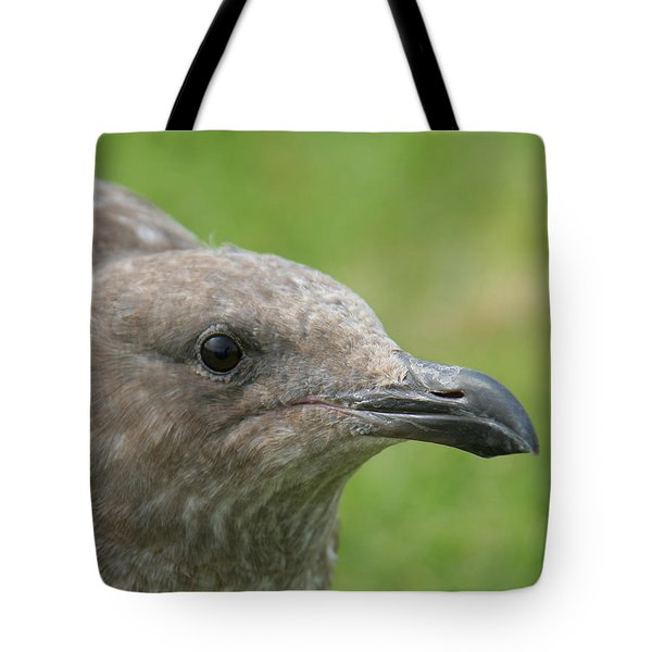 Tote Bag featuring the photograph Young Seagull by Bob and Jan Shriner