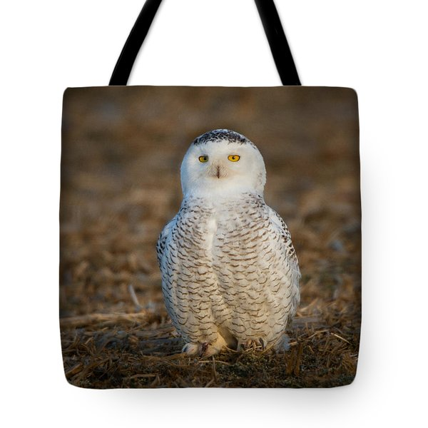 Young Snowy Owl Tote Bag