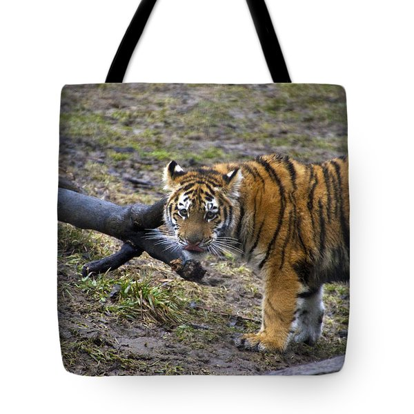 Young Tiger Tote Bag by Thomas Woolworth