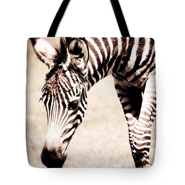 Zebra Foal Sepia Tones Tote Bag