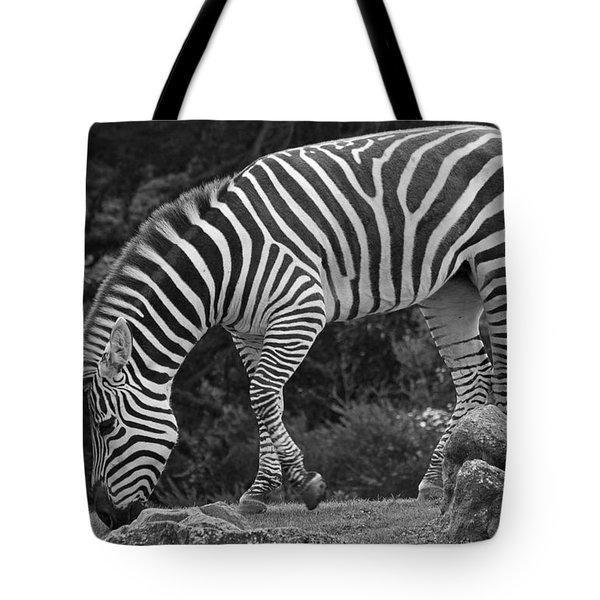 Tote Bag featuring the photograph Zebra In Black And White by Kate Brown