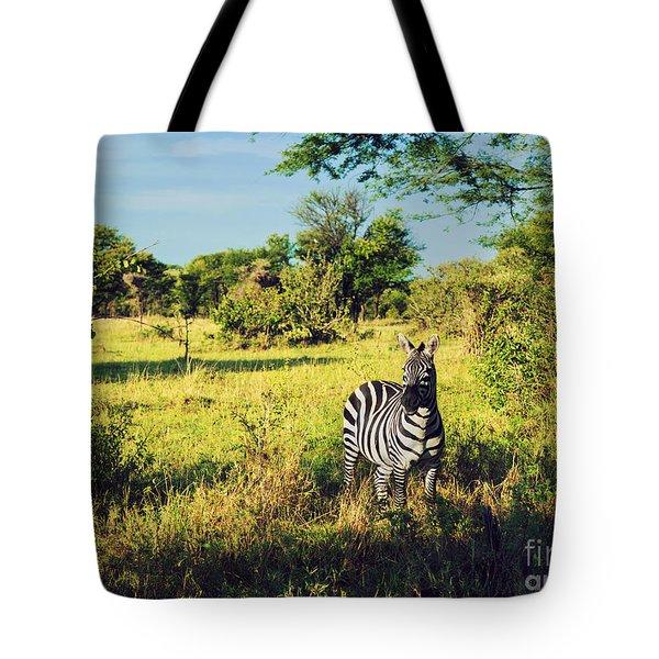 Zebra In Grass On African Savanna. Tote Bag by Michal Bednarek