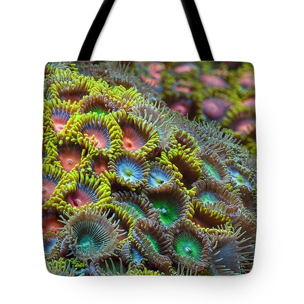 Zoanthids Tote Bag